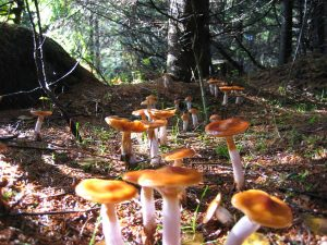 Houby, houby a zase jenom houby….