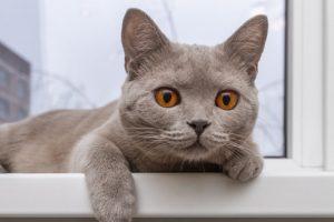 Je to těžko uvěřitelné, ale obyčejná kočka vás ochrání před nemocemi i špatnými energiemi