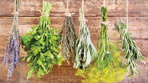 Je tu podzim a související boje s nachlazením. Jaké fígle z bylinek můžete použít?
